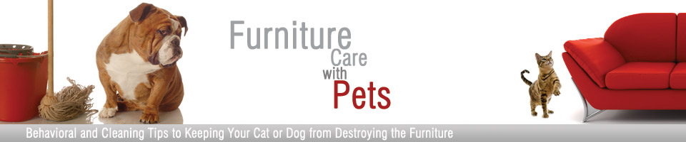Furniture Care With Pets