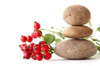 Standing Stones Rose Hip